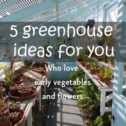 5 greenhouse ideas for you- Who love early vegetables and flowers