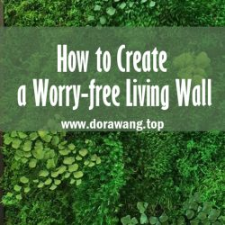 How to Create a Worry-free Living Wall